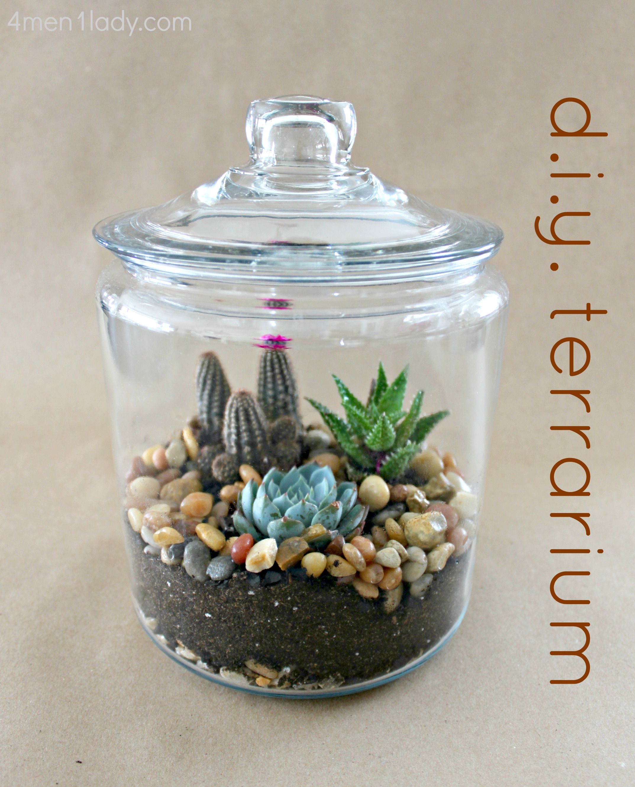 I Have The Lid On My Jar Here But After Doing A Little Research I Learned  That Desert Plants Are Not The Most Ideal For A Closed Terrarium Because  They ...